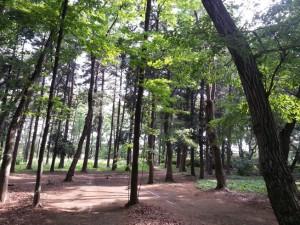 道路建設が予定されている中央公園の雑木林
